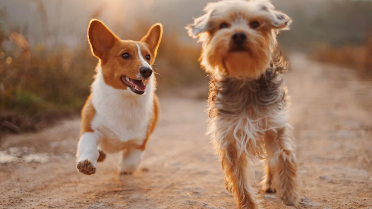 Därför är hunden människans bästa vän